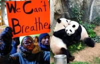 We can't breathe sign at protest beside pandas at Hong Kong zoo.